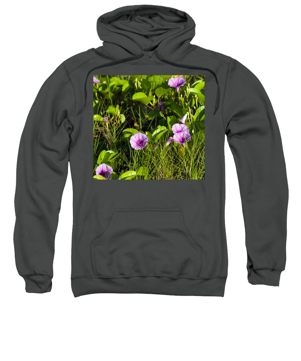 Railroad; Vine; Morning; Glory; Ipomoea; Pes-caprae; Pes; Caprae; Flower; Florida; Shore; Beach; Bea Sweatshirt featuring the photograph Railroad Vine by Allan Hughes