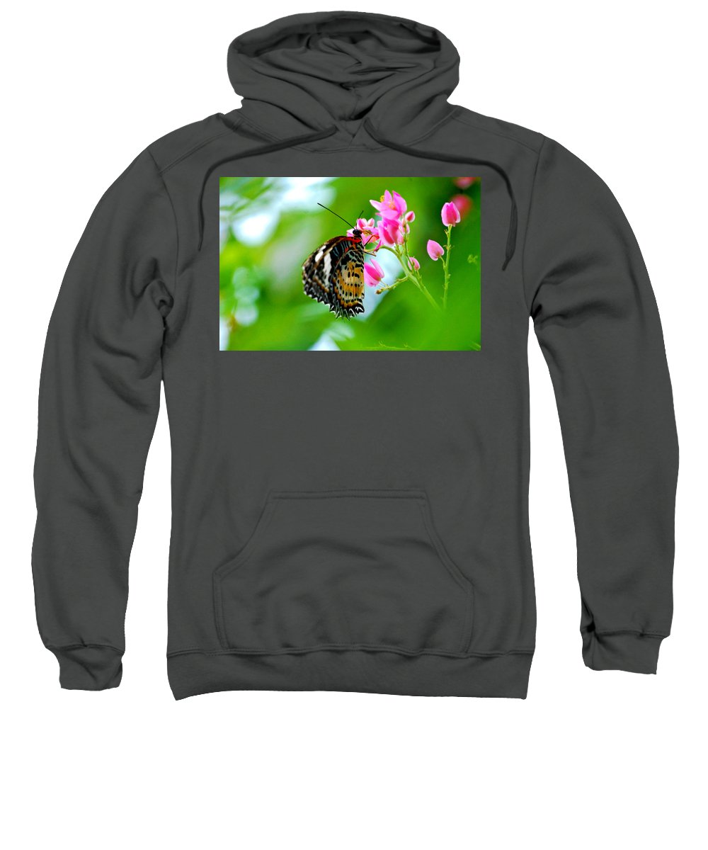 Butterfly Sweatshirt featuring the photograph Rainbow Butterfly by Peggy Franz