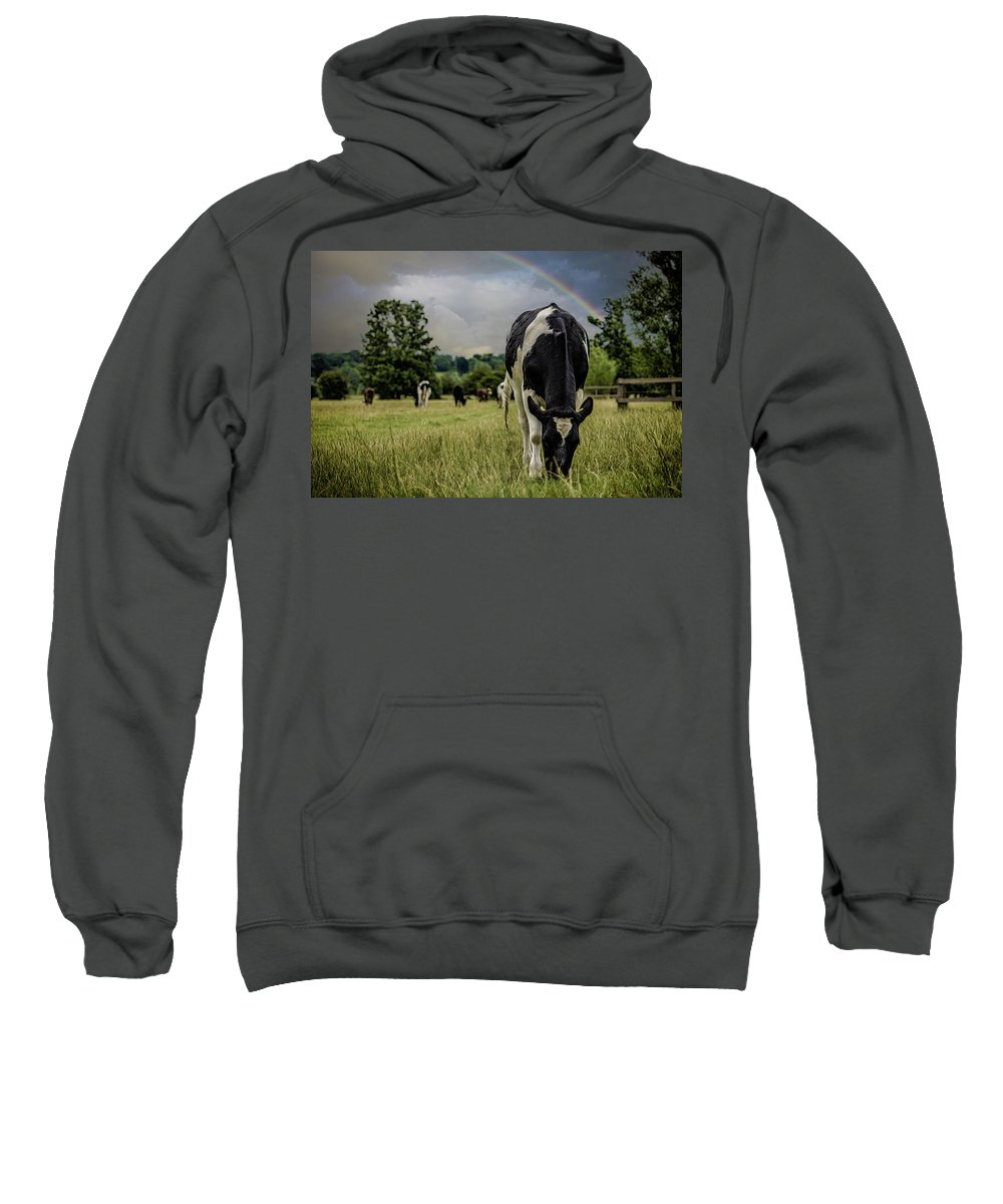 Cow Sweatshirt featuring the photograph Rainbow Cow by Martin Newman