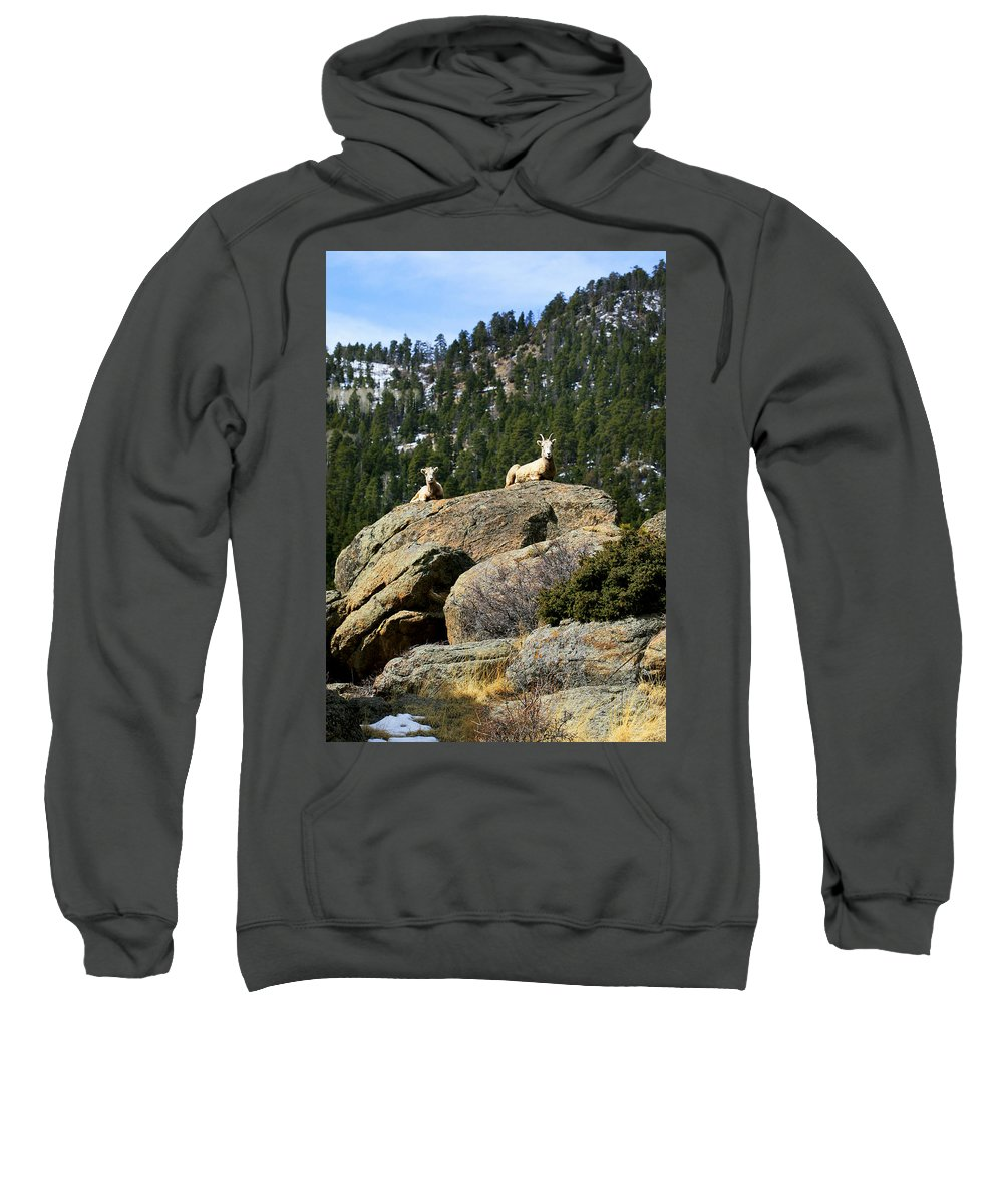 Ram Sweatshirt featuring the photograph Ram On The Watch by Marilyn Hunt