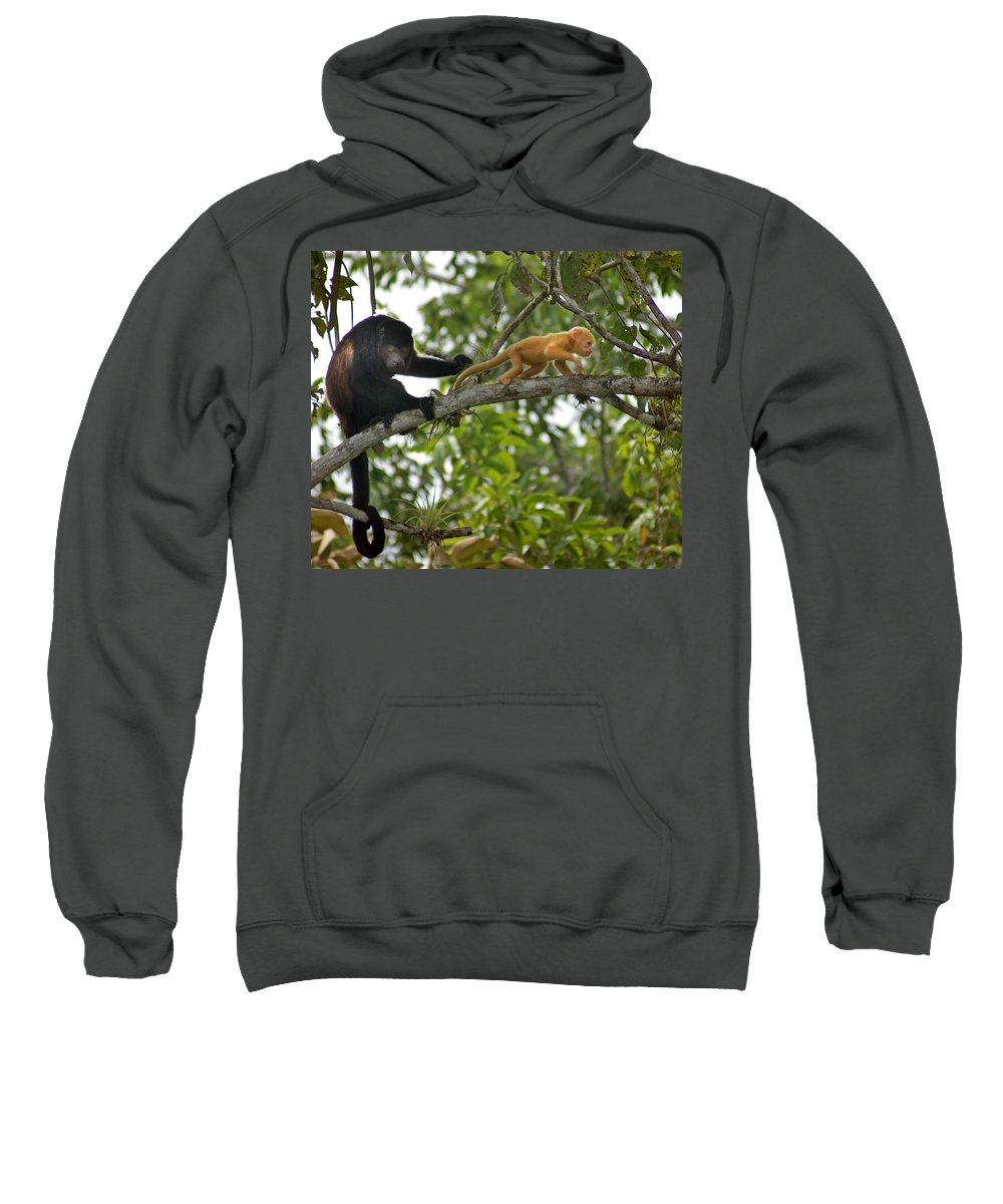 Monkey Sweatshirt featuring the photograph Rare Golden Monkey by Heather Coen