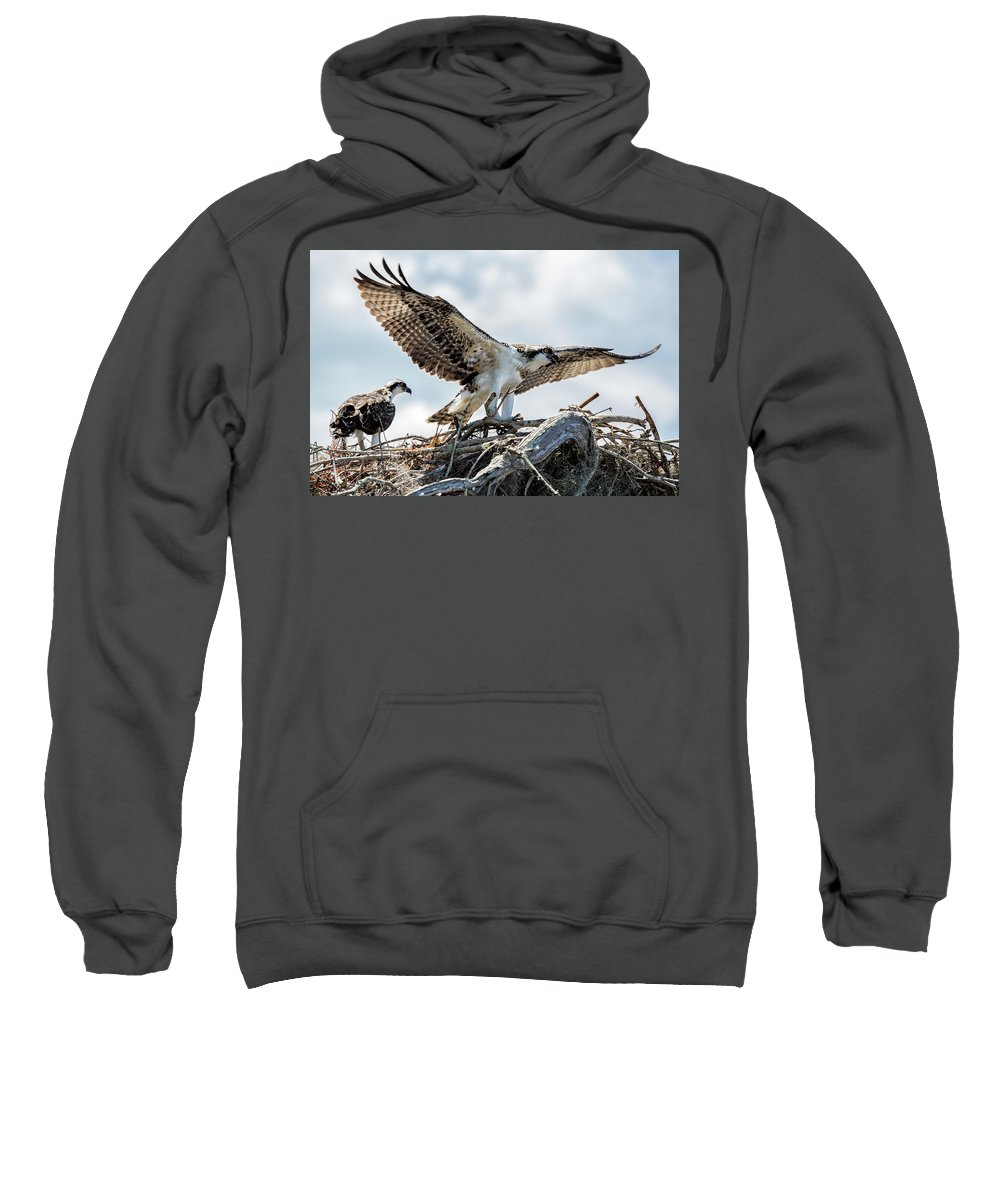Bird Sweatshirt featuring the photograph Ready For Flight by Susan Pantuso