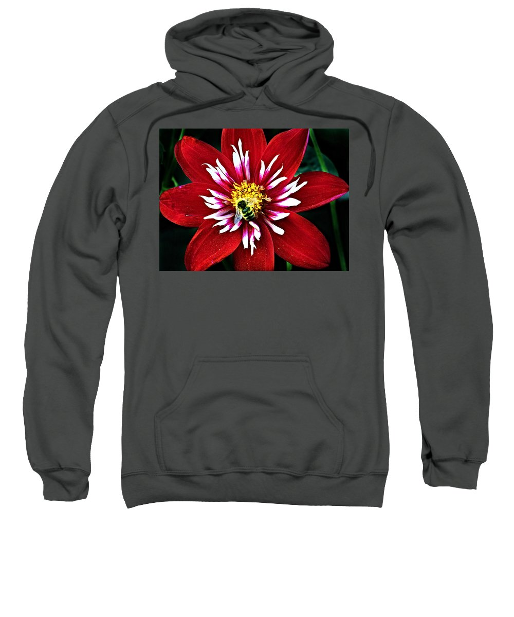 Flower Sweatshirt featuring the photograph Red And White Flower With Bee by Anthony Jones