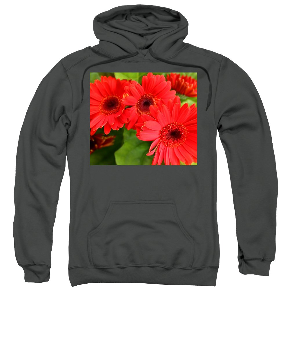 Red Sweatshirt featuring the photograph Red Daisies by Susan Lotterer