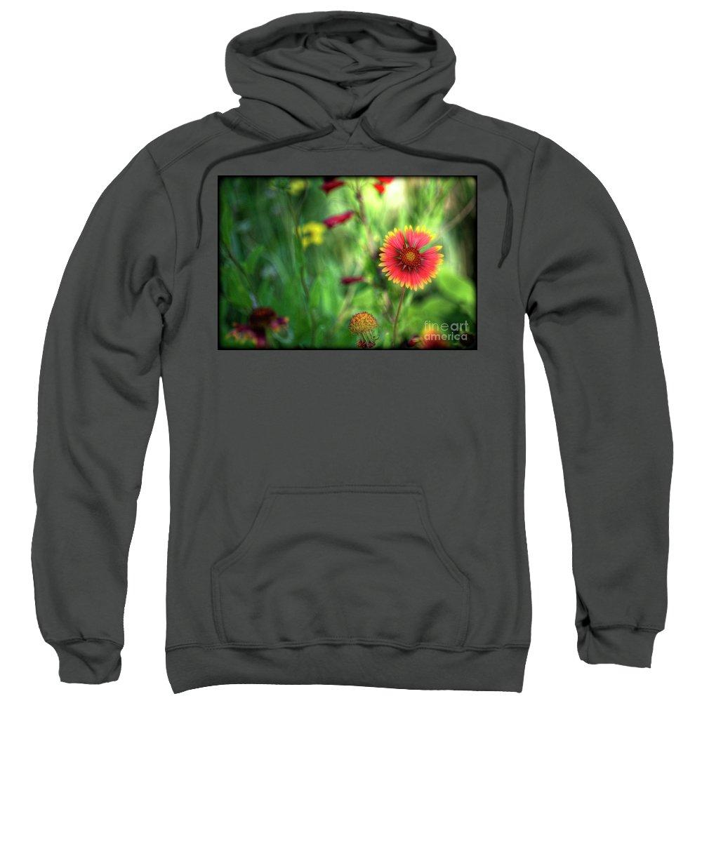 Gaillardia Sweatshirt featuring the photograph Red Daisy by Saija Lehtonen