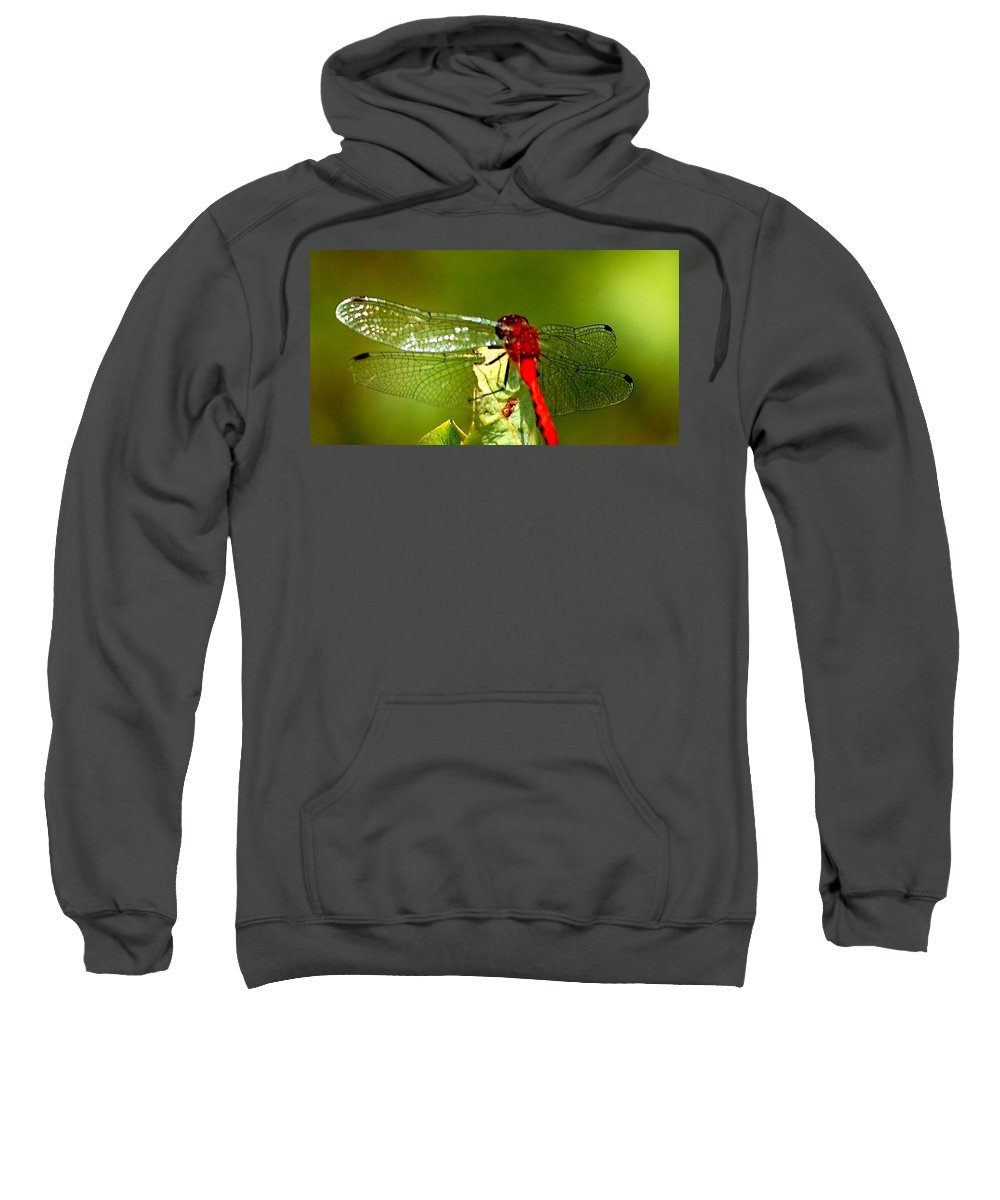Digital Photograph Sweatshirt featuring the photograph Red Dragon 2 by David Lane