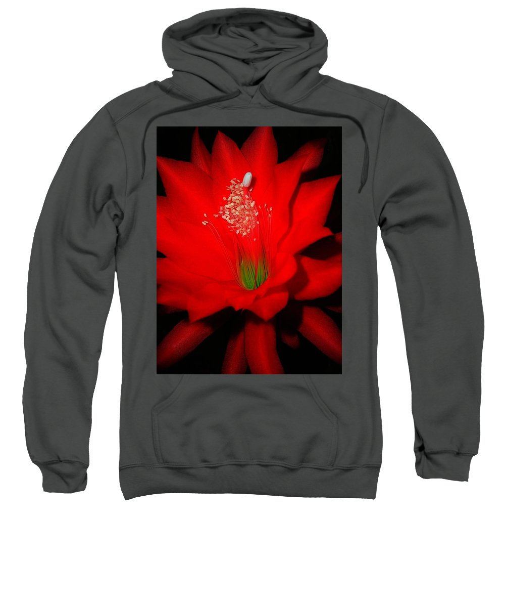 Garden Sweatshirt featuring the photograph Red Flower For You by Juergen Weiss