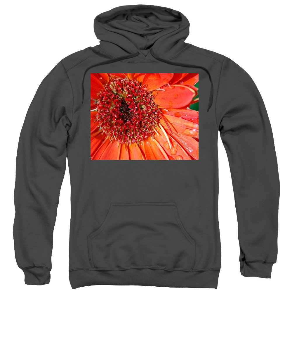 Gerber Daisy Sweatshirt featuring the photograph Red Gerbera Daisy by Amy Fose