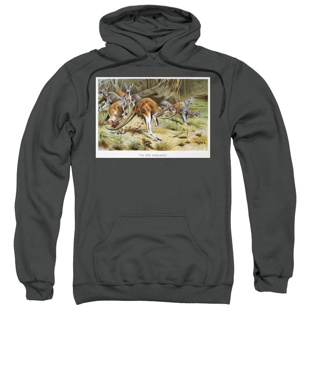 Artcom Sweatshirt featuring the photograph Red Kangaroo by Granger