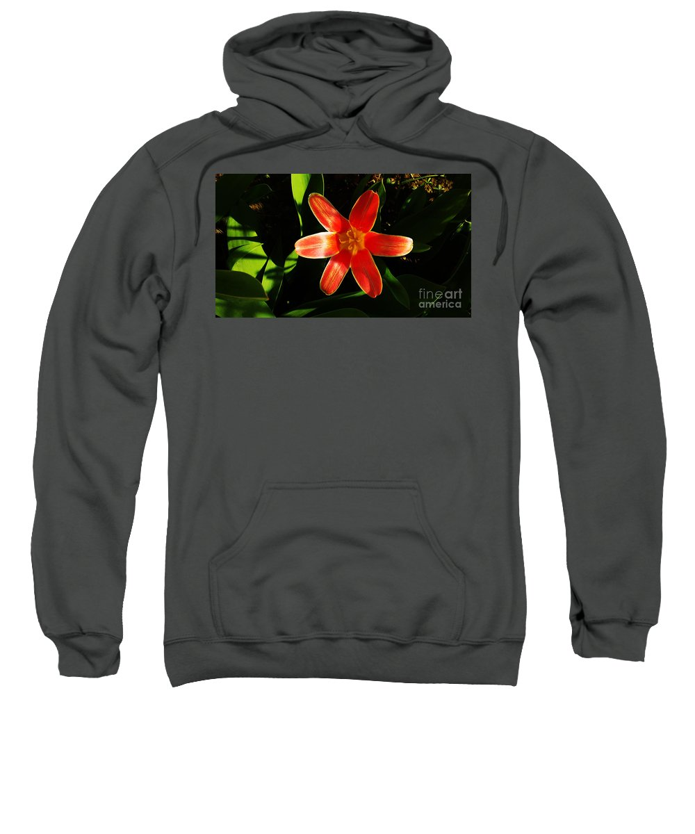 Tulip Sweatshirt featuring the photograph Red Laughing At Me by Jasna Dragun