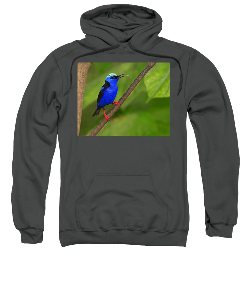 Red-legged Honeycreeper Sweatshirt featuring the photograph Red-legged Honeycreeper by Tony Beck