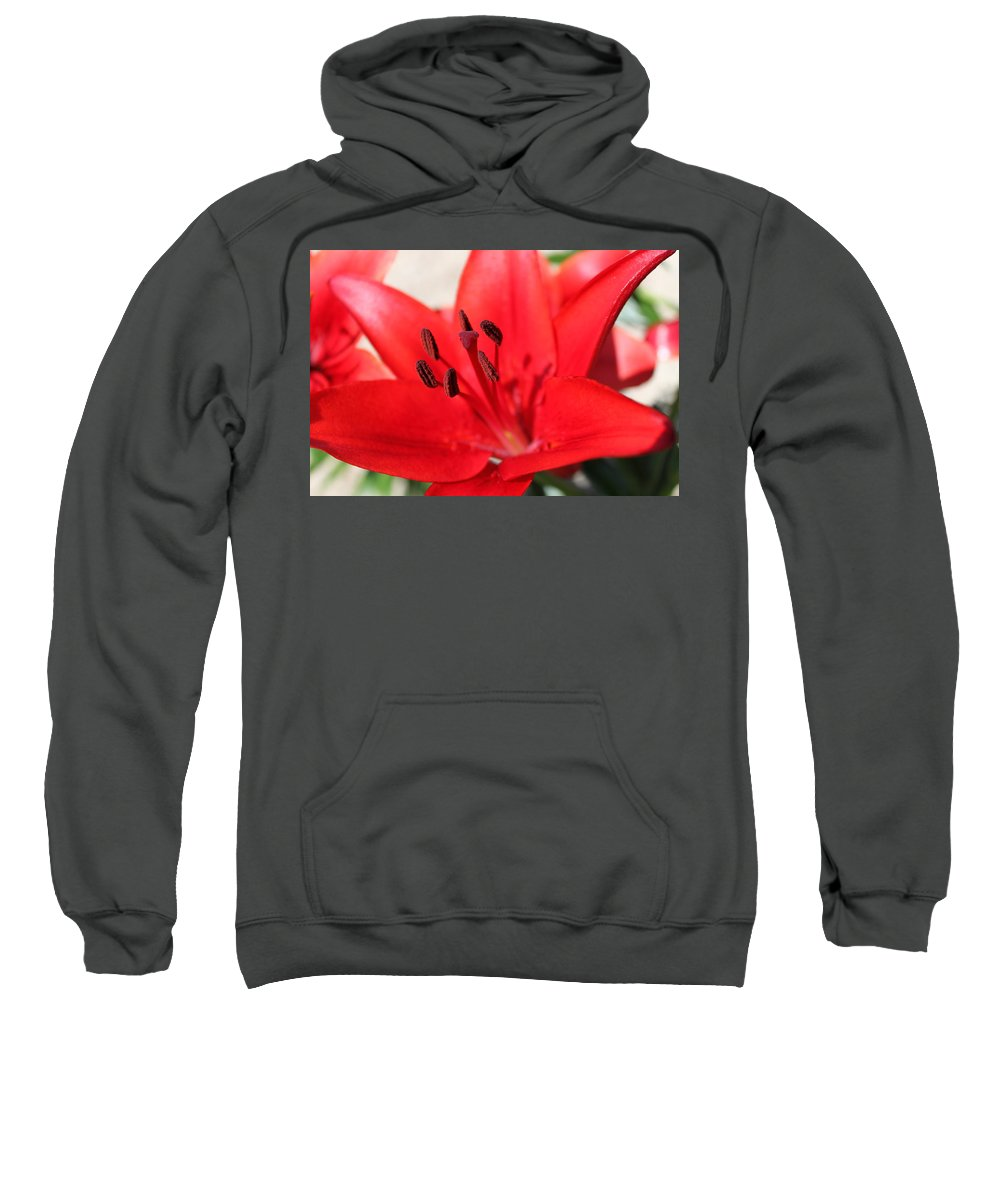 Lilly Sweatshirt featuring the photograph Red Lilly by Lauri Novak