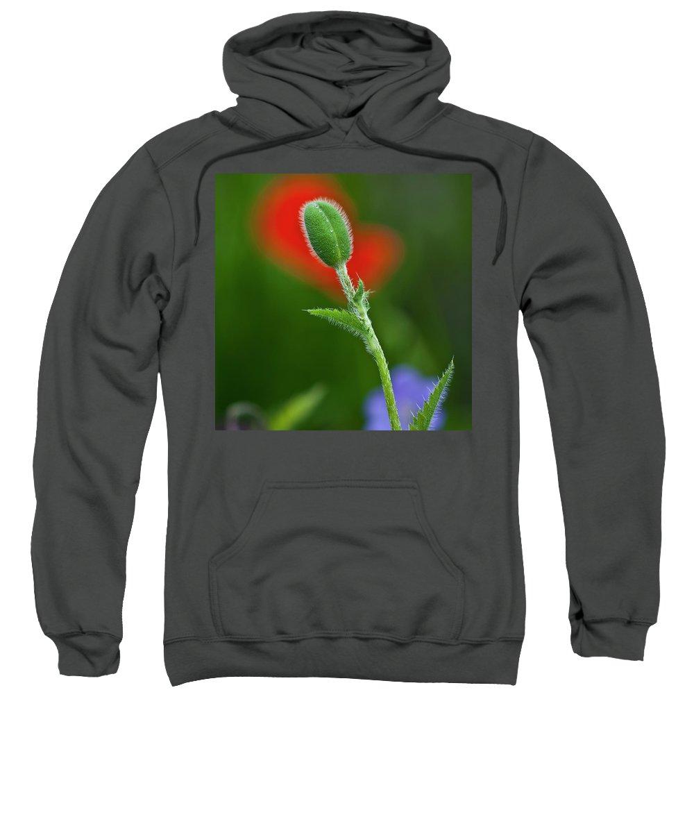Poppy Sweatshirt featuring the photograph Red Poppy Bud by Heiko Koehrer-Wagner