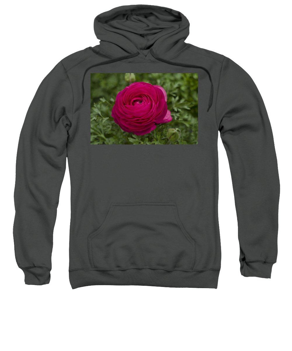 Ranunculus Sweatshirt featuring the photograph Red Ranunculus by QQ Photoworks