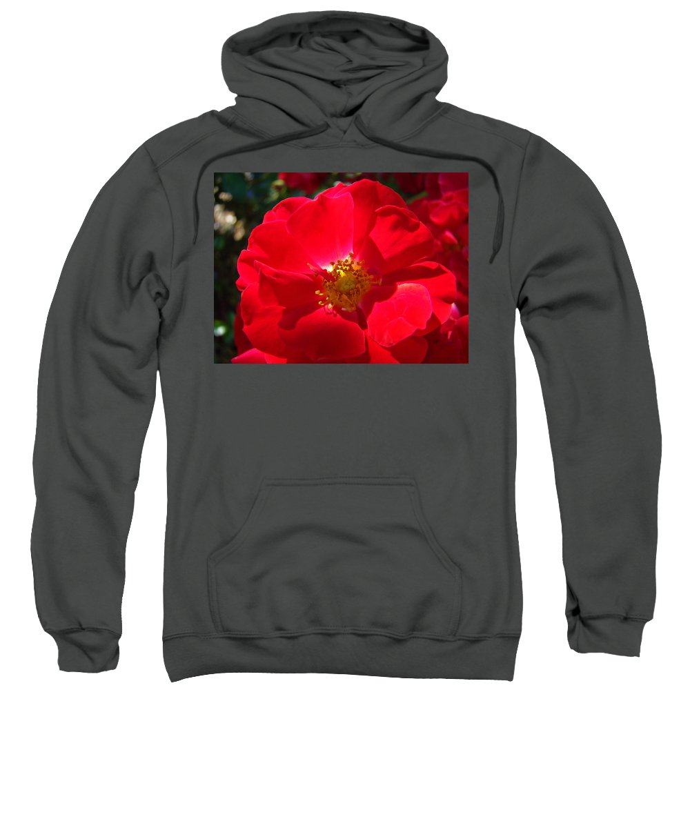 Rose Sweatshirt featuring the photograph Red Rose Art Print Sunlit Roses Botanical Giclee Baslee Troutman by Baslee Troutman