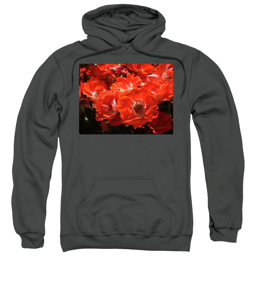 Rose Sweatshirt featuring the photograph Red Roses Botanical Landscape 1 Red Rose Giclee Prints Baslee Troutman by Baslee Troutman