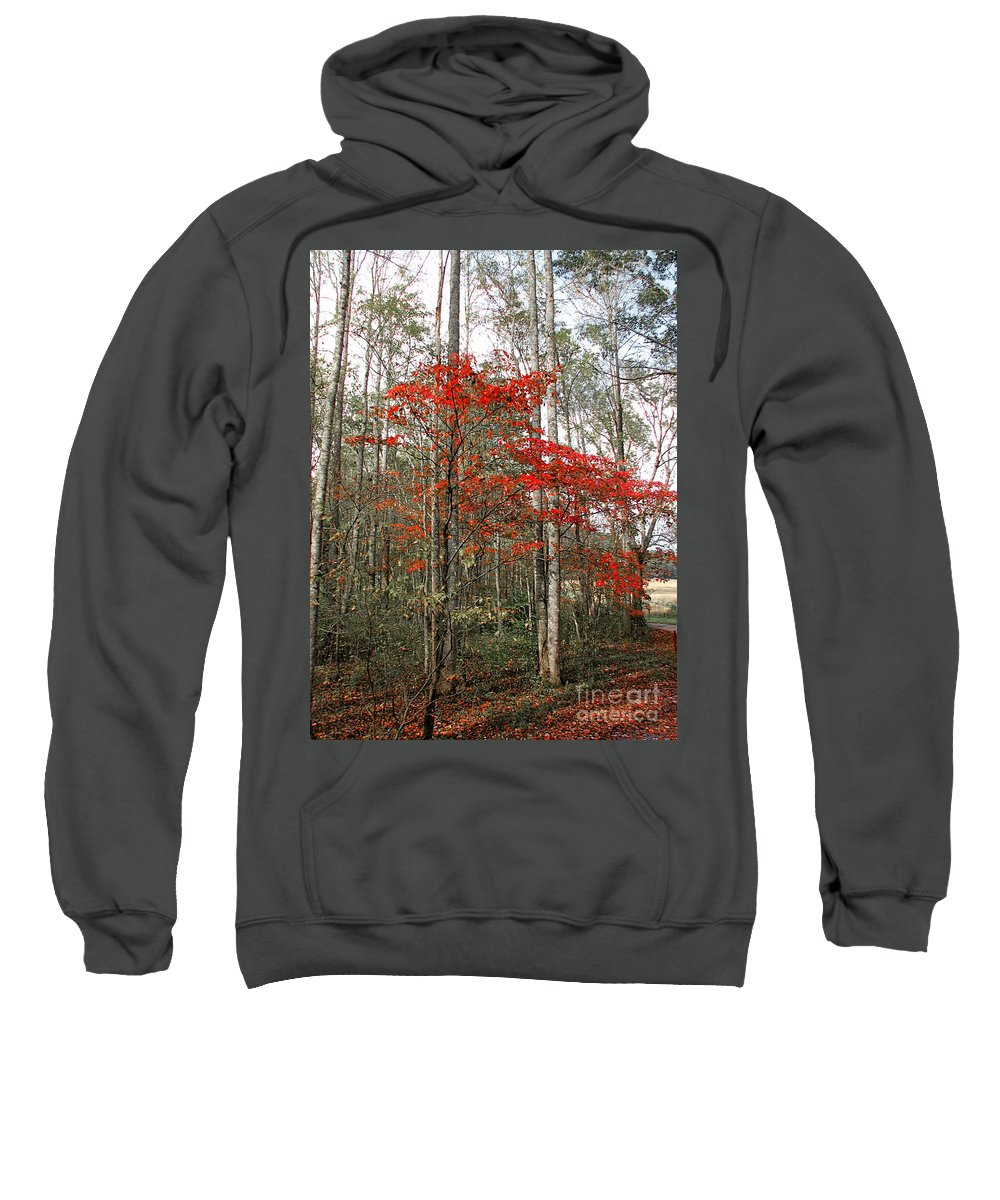 Landscape Sweatshirt featuring the photograph Red Tree by Todd Blanchard