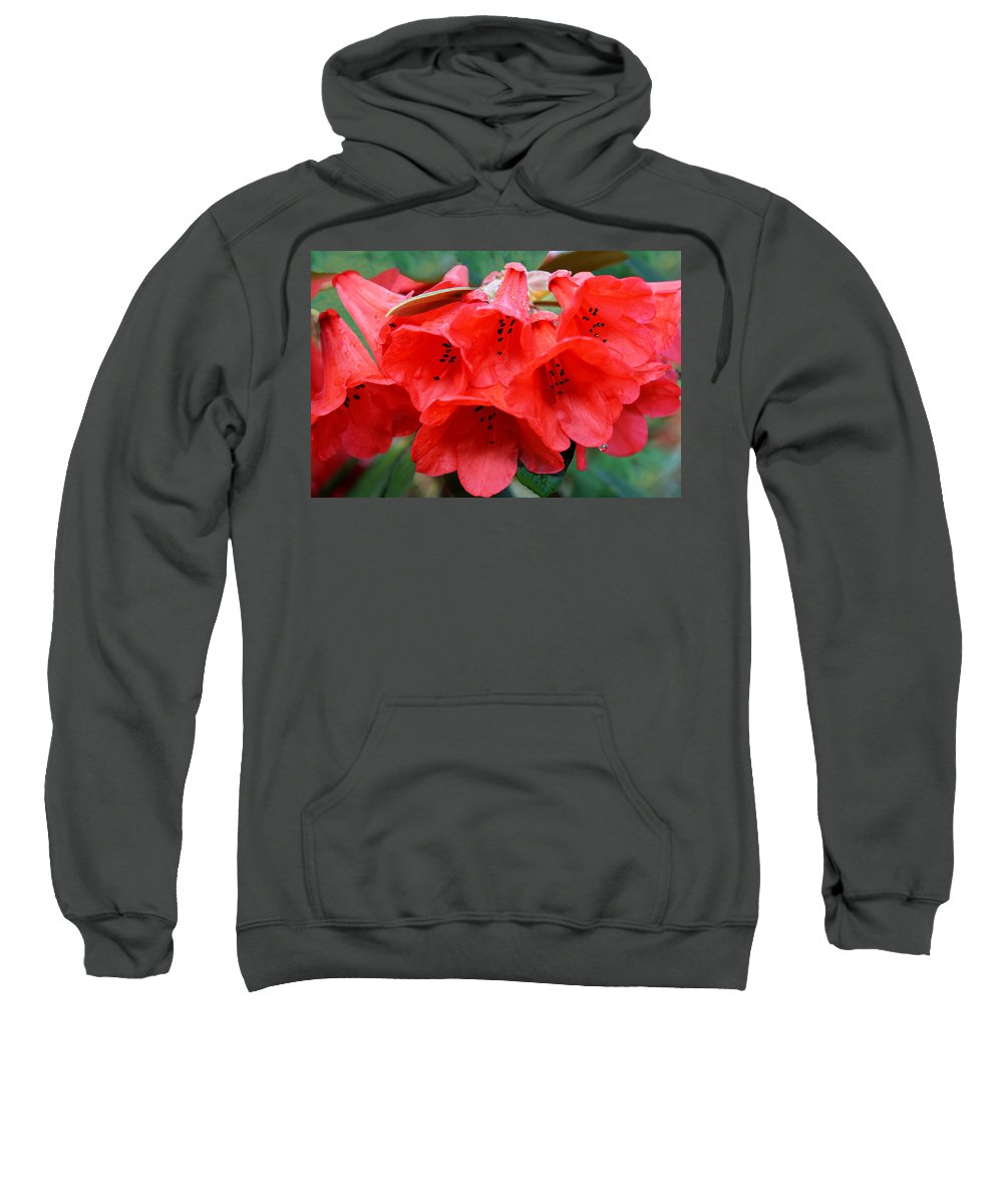 Rhododendron Sweatshirt featuring the photograph Red Trumpet Rhodies by Ginny Barklow