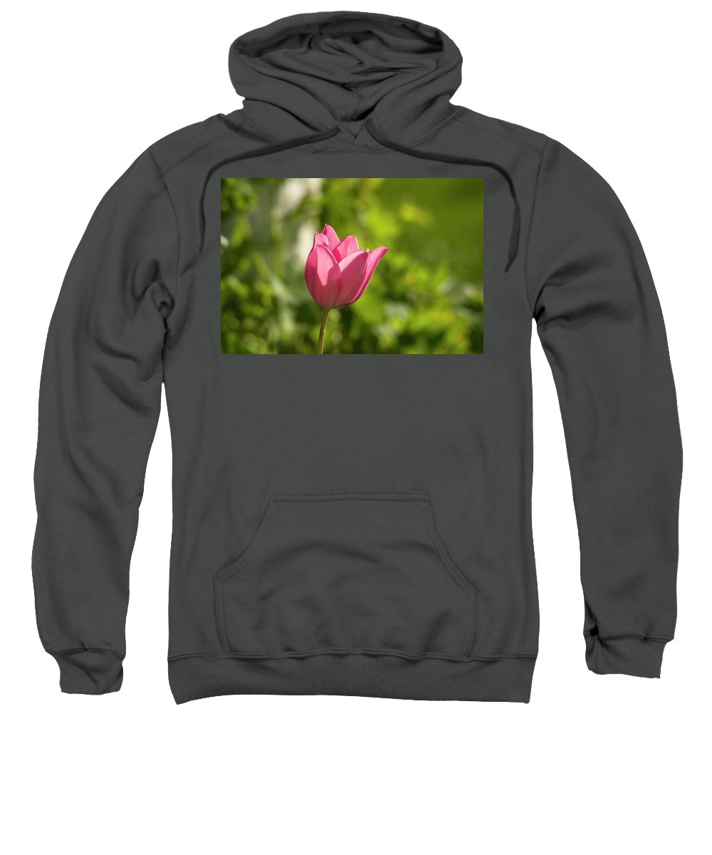 Tulip In The Garden Sweatshirt featuring the photograph Red Tulip Head by Cliff Norton