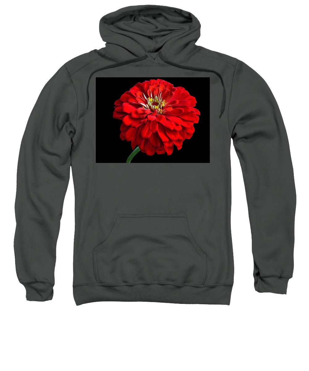 Flower Sweatshirt featuring the photograph Red Zinnia by Sandy Keeton