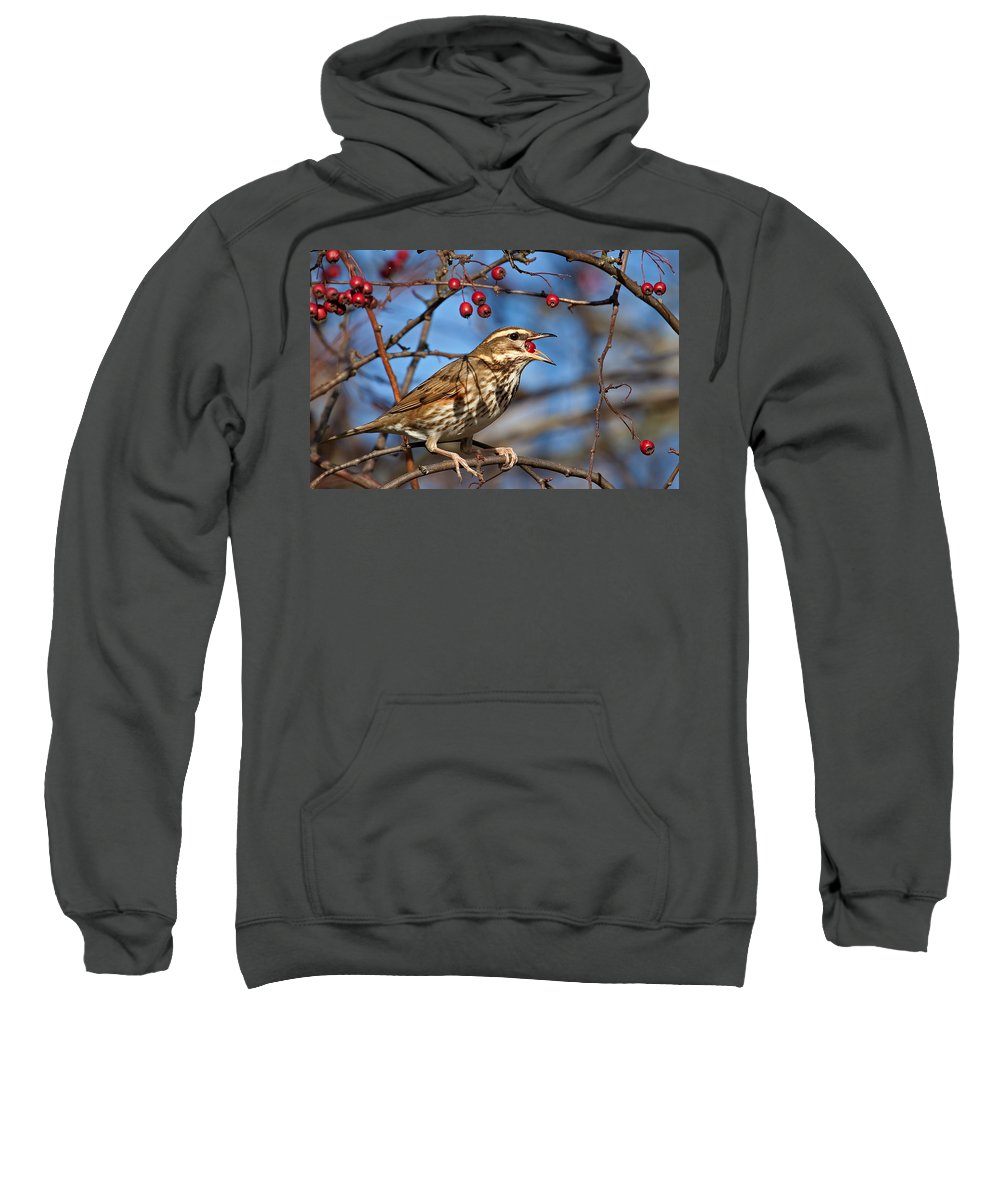 Redwing Sweatshirt featuring the photograph Redwing With Berry by Bob Kemp