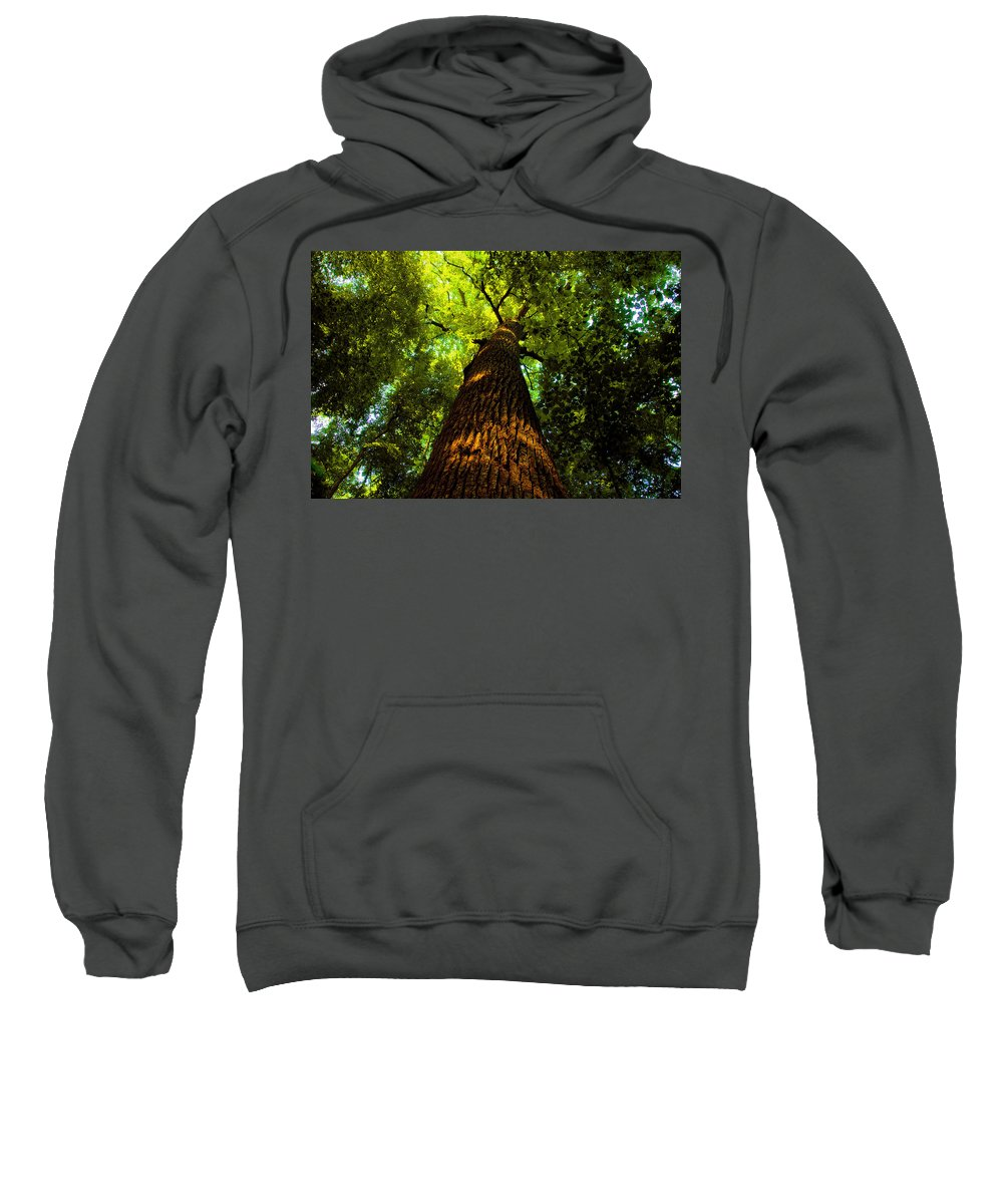 Redwood Forest Sweatshirt featuring the painting Redwoods by David Lee Thompson