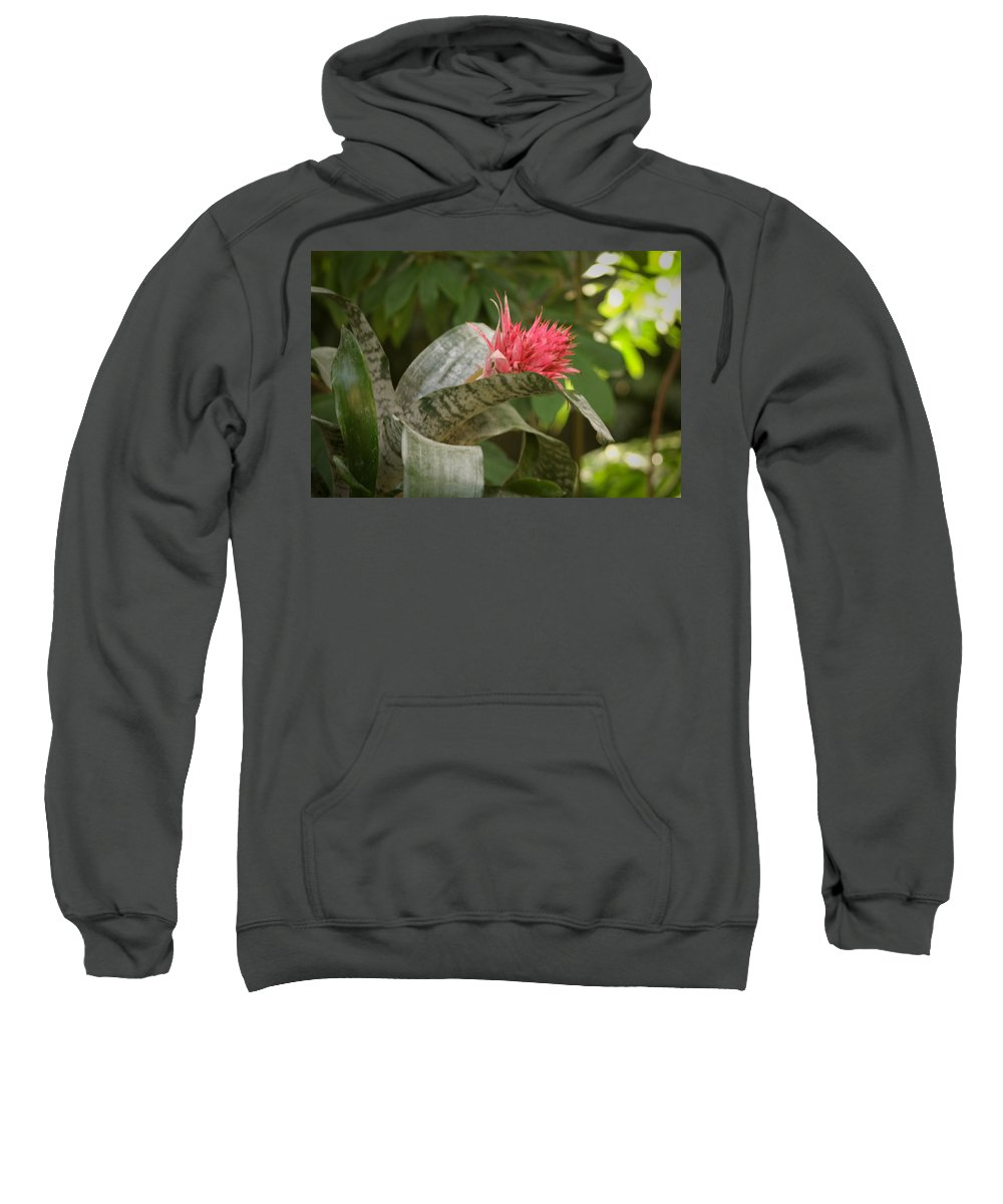 Mount Rushmore Sweatshirt featuring the photograph Reptile Garden II by Mike Oistad