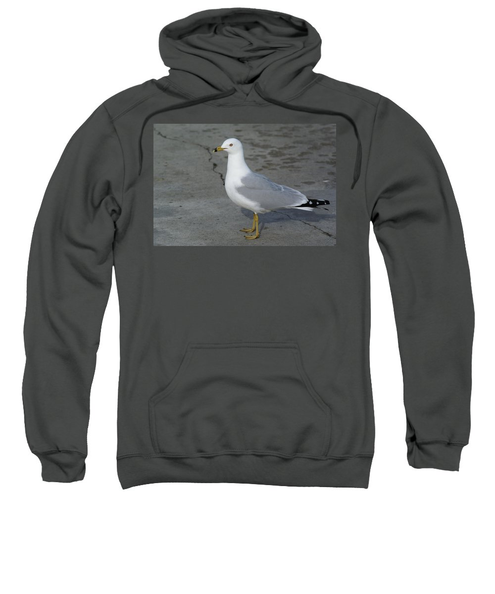 Birds Sweatshirt featuring the photograph Ring-billed Gull by Ben Upham III