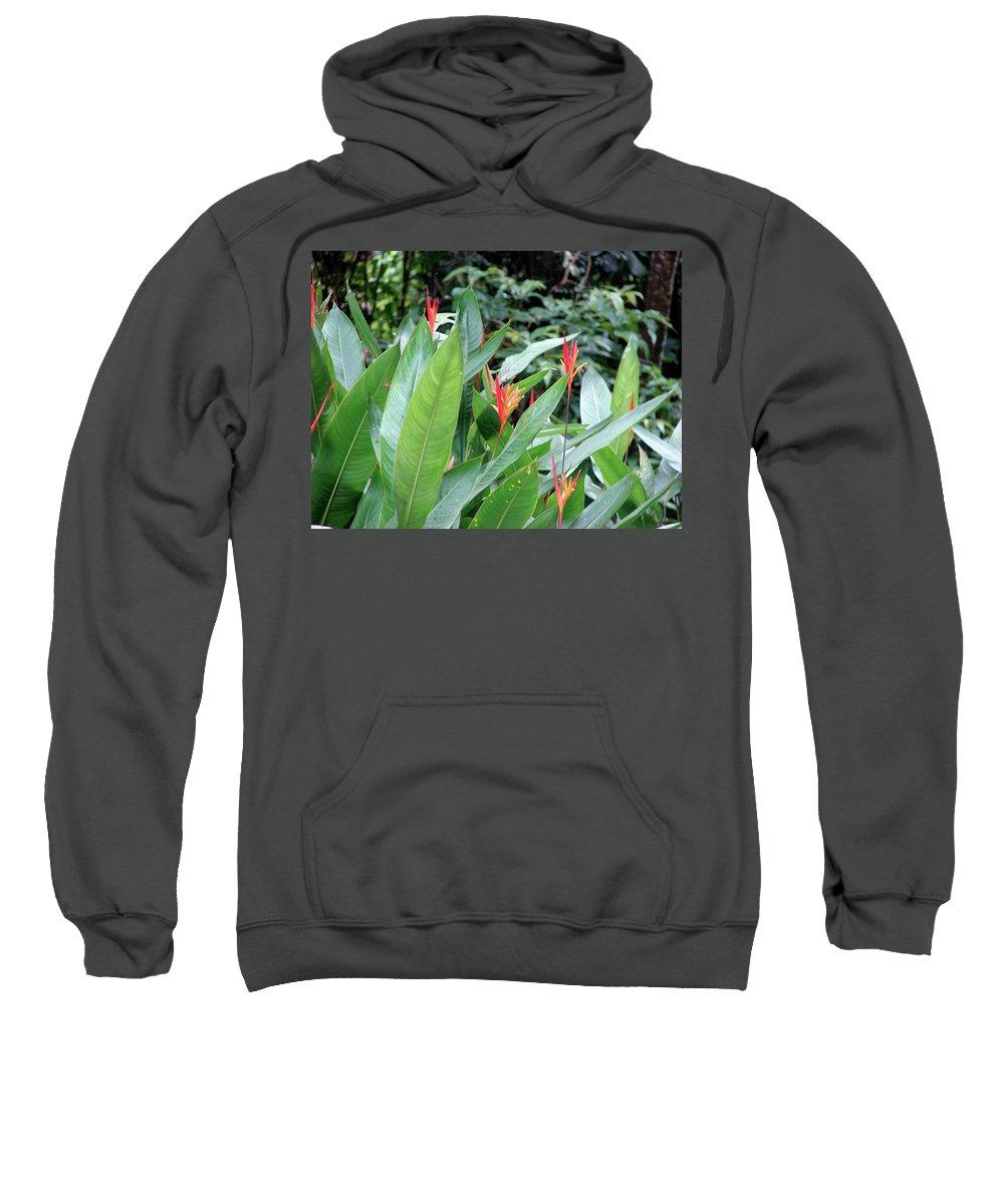 Rio De Janeiro Sweatshirt featuring the photograph Rio De Janeiro Flowers by Brett Winn