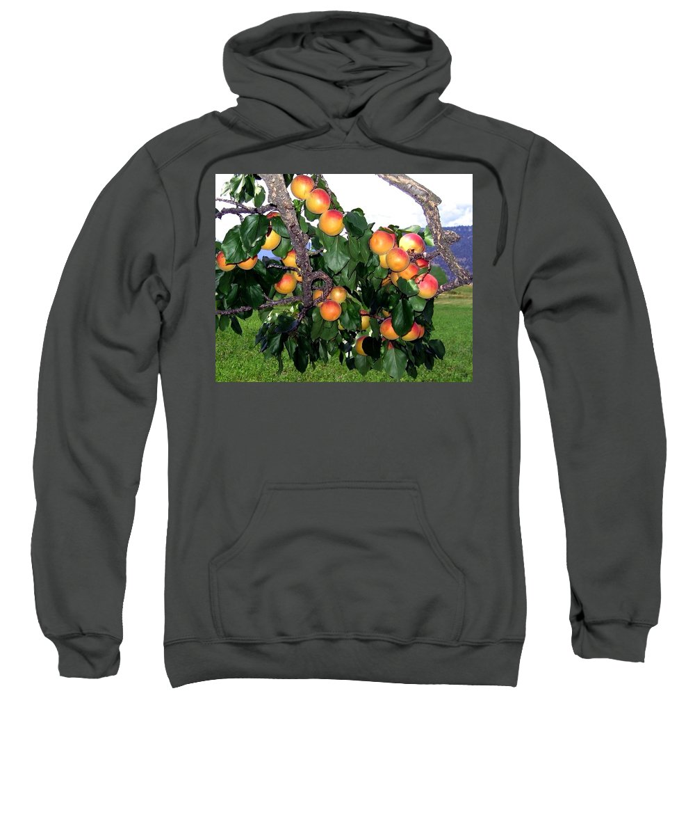 Apricots Sweatshirt featuring the photograph Ripe Apricots by Will Borden