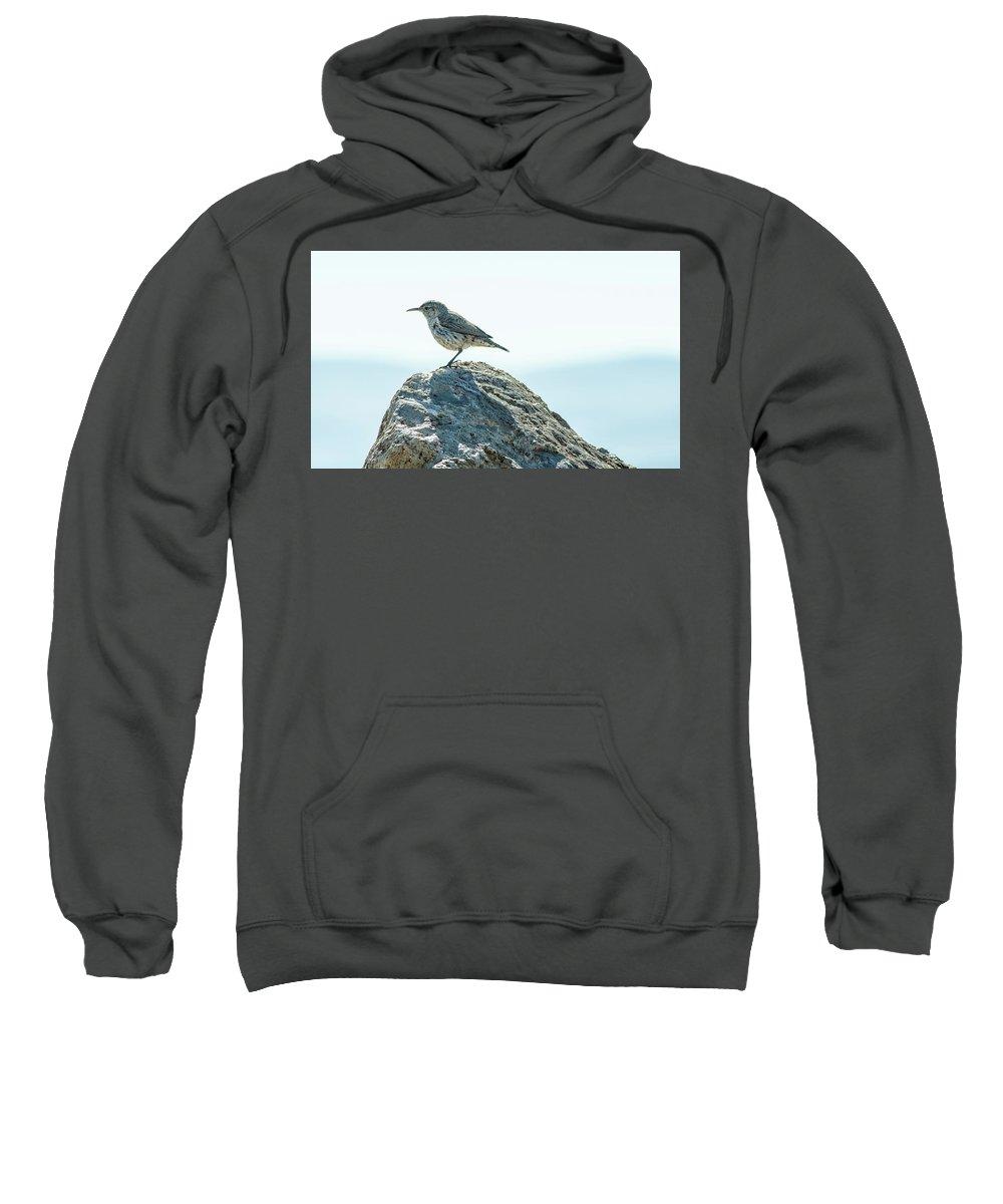 Rock Wren Sweatshirt featuring the photograph Rock Wren by Rick Mosher
