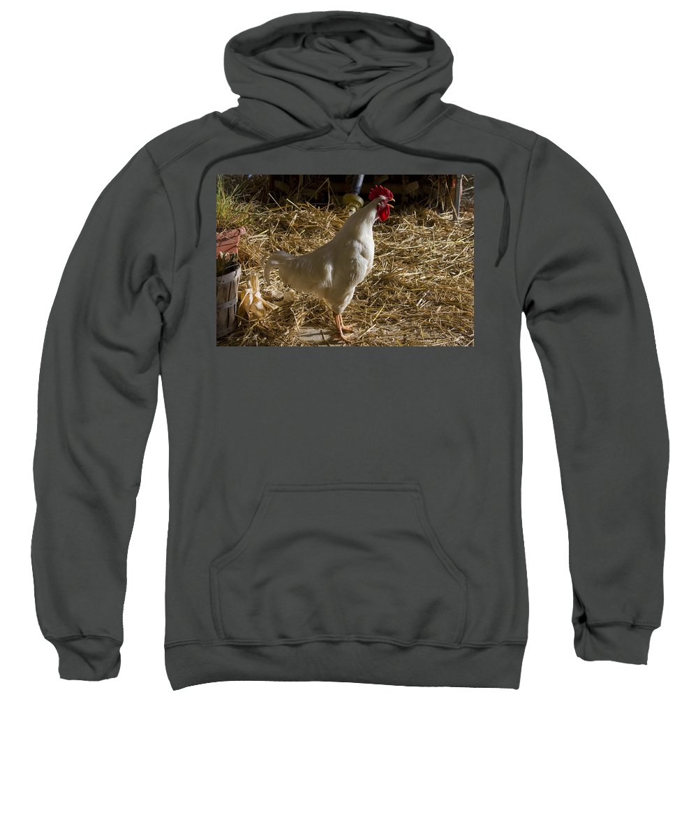 Rooster Crow Crowing Chicken Farm Straw White Red Rural Sweatshirt featuring the photograph Rooster Crowing by Andrei Shliakhau