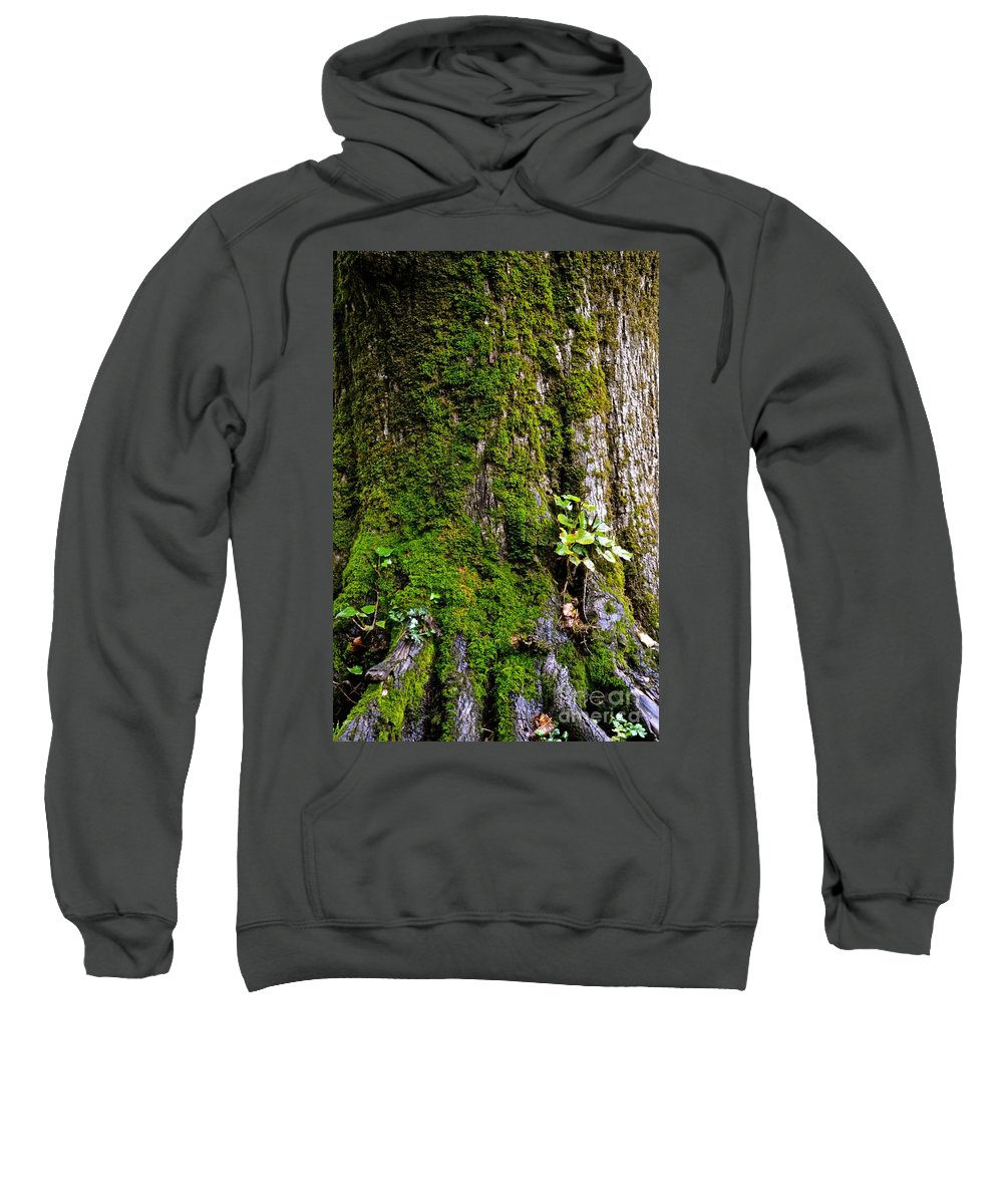 Roots Sweatshirt featuring the photograph Roots by Photos By Zulma