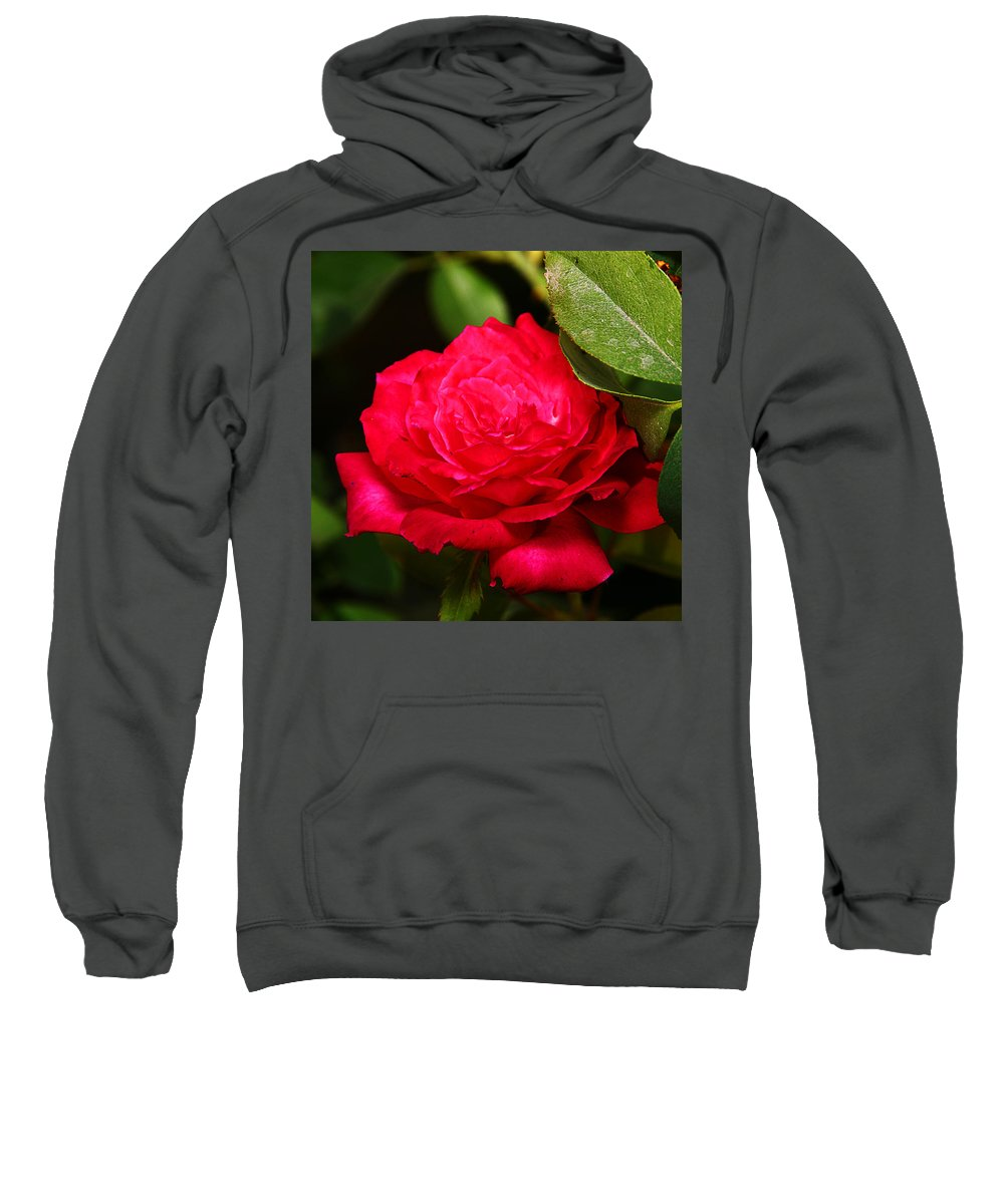 Flower Sweatshirt featuring the photograph Rose by Anthony Jones