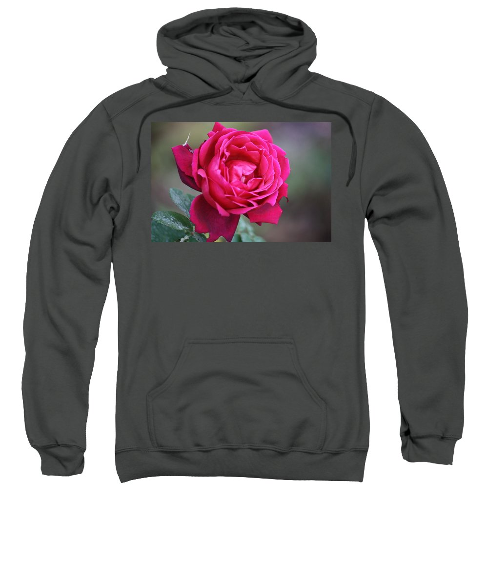 Floral Sweatshirt featuring the photograph Rose by Donna Walsh