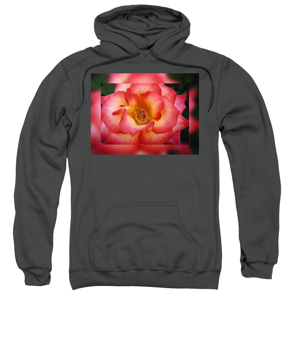 Roses Sweatshirt featuring the digital art Rose In Reflection by Linda McAlpine