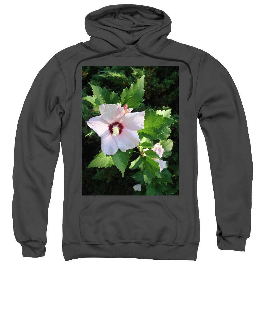 Rose Sweatshirt featuring the photograph Rose Of Sharon by Cathy Klopfenstein