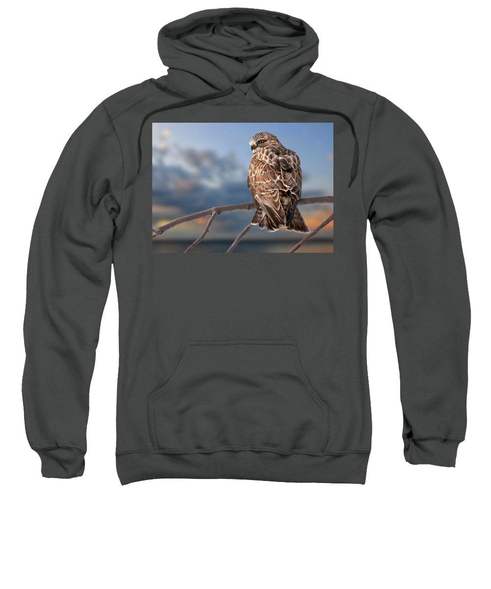 Rough Legged Hawk Sweatshirt featuring the photograph Rough Legged Hawk by Michael Cummings