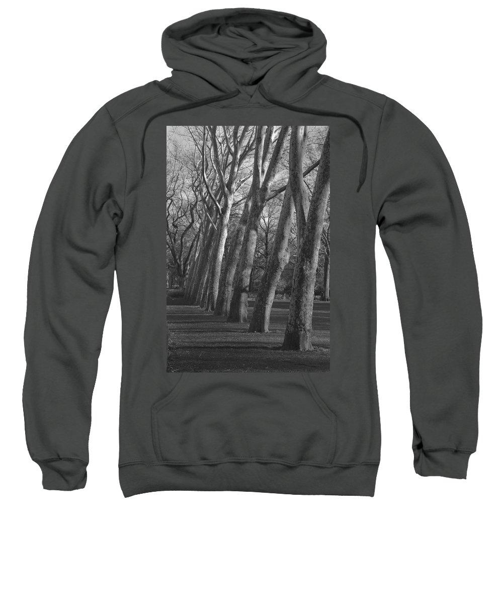 Trees Sweatshirt featuring the photograph Row Trees by Henri Irizarri