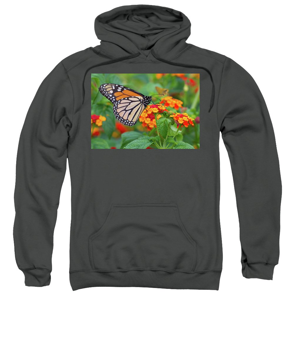 Butterfly Sweatshirt featuring the photograph Royal Butterfly by Shelley Neff