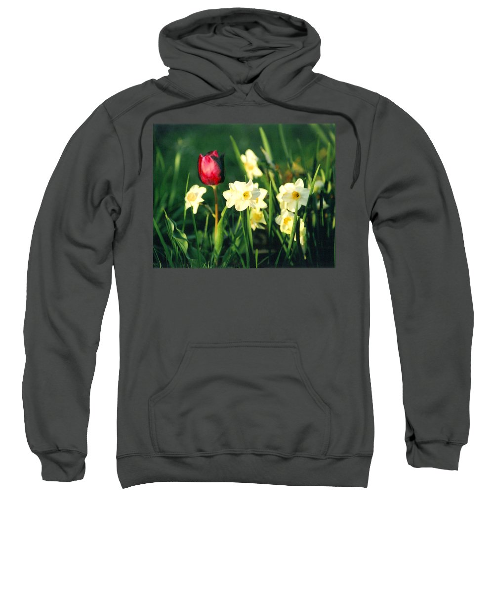 Tulips Sweatshirt featuring the photograph Royal Spring by Steve Karol