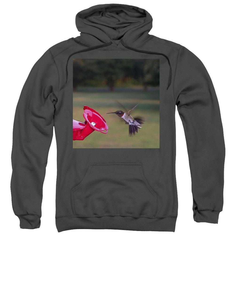 Ruby-throated Hummingbird Sweatshirt featuring the photograph Ruby-throated Hummingbird by Brett Winn