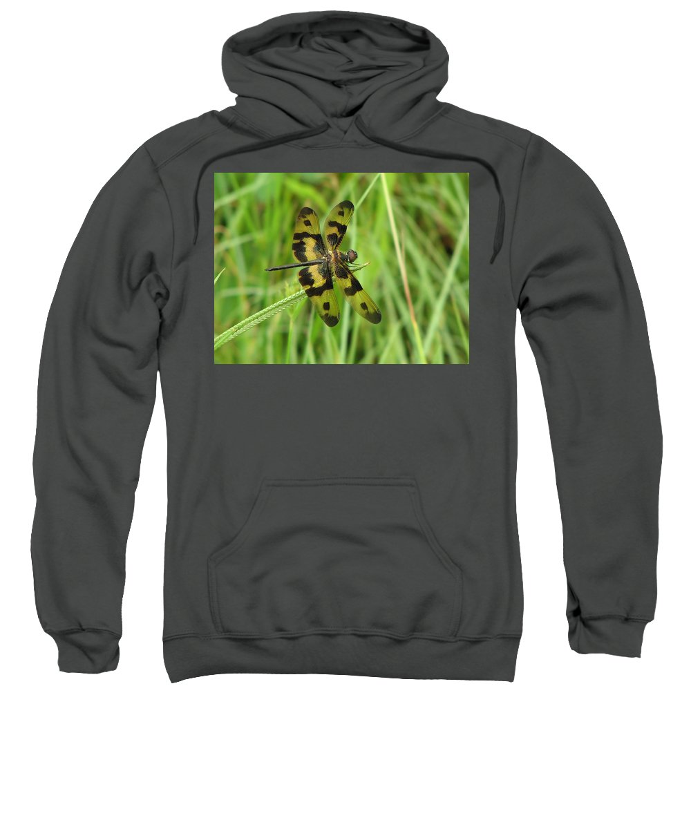 Dragonfly Sweatshirt featuring the photograph Ryothemis Dragonfly by Bob Kemp