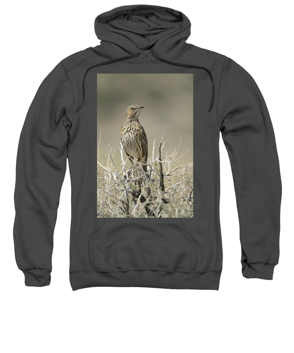 Mfob Sweatshirt featuring the photograph Sage Thrasher by Richard Eastman