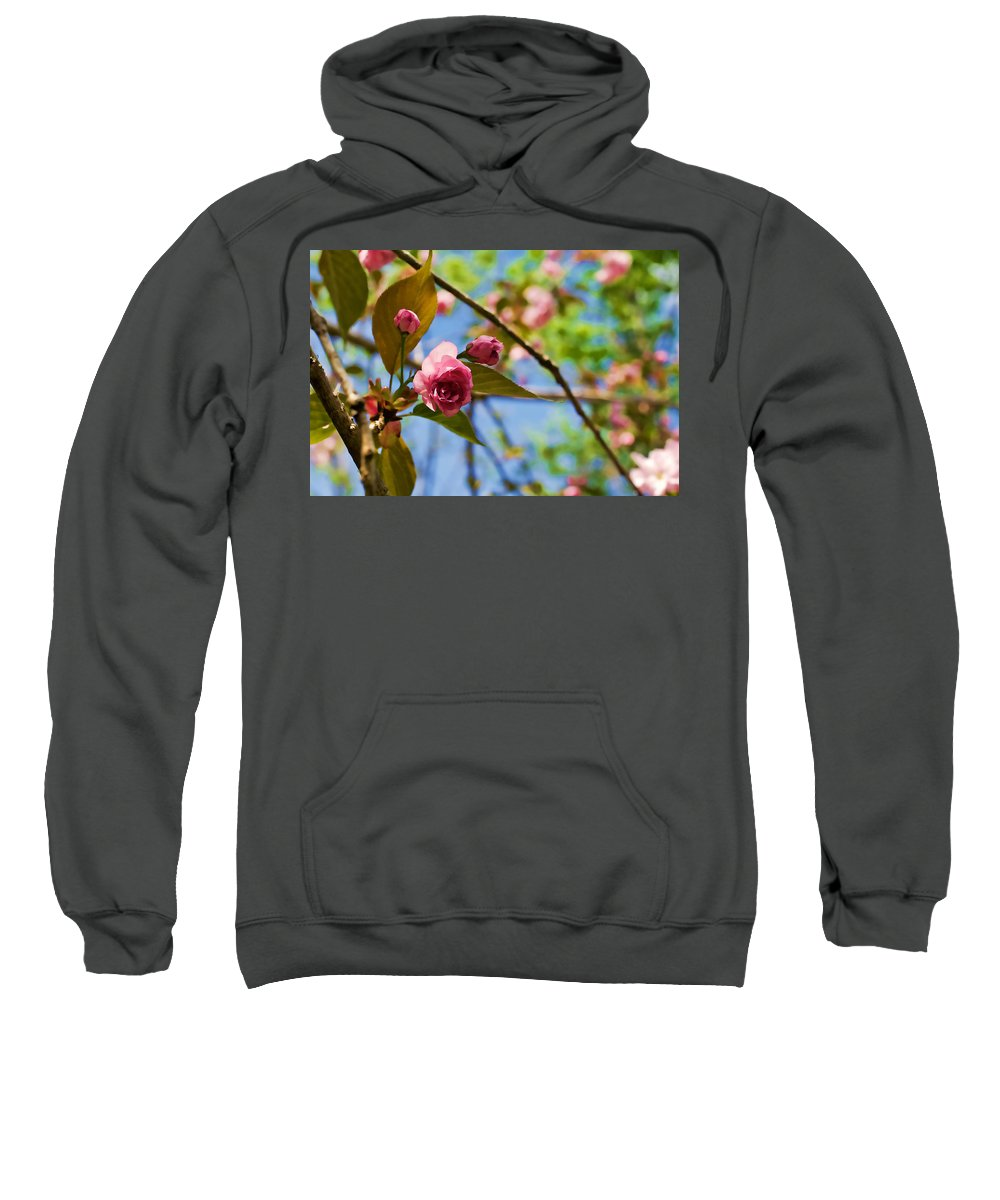 Spring Sweatshirt featuring the photograph Sakura by Mike Smale