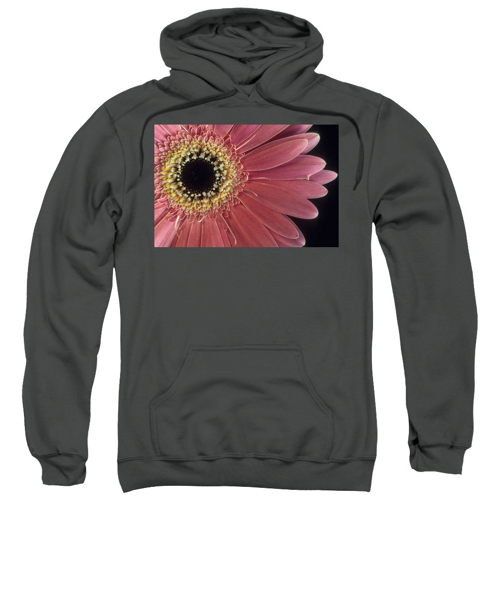 Salmon Gerber Daisy Sweatshirt featuring the photograph Salmon Gerber Daisy by Laurie Paci