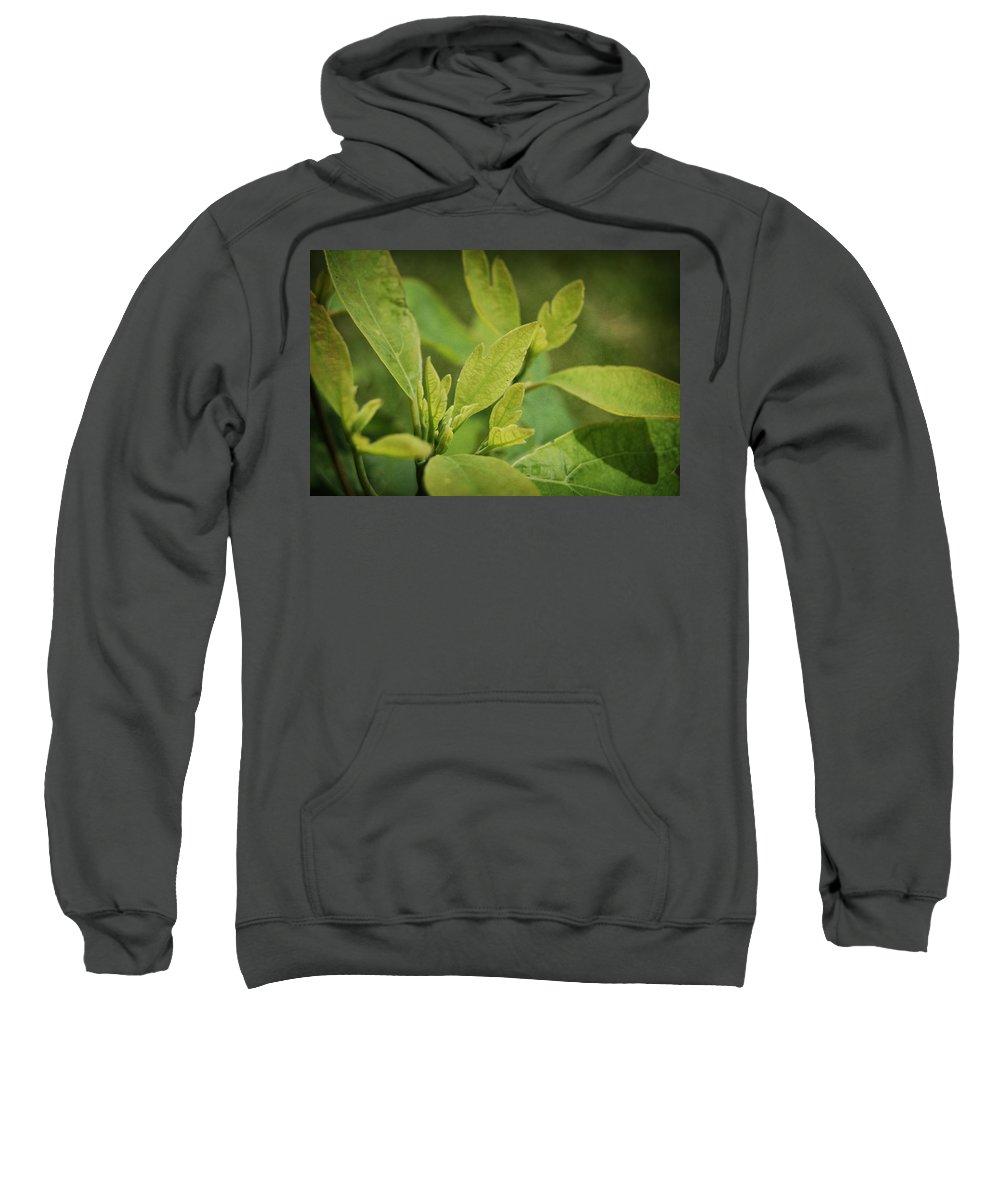Sassafrass Sweatshirt featuring the photograph Sassafras Tree by Amber Flowers