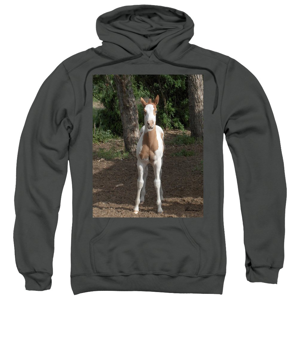 Horse Horses Colt Filly Mare Stallion Foal Ranch Farm Herd Paint Attitude Sweatshirt featuring the photograph Sassy Filly by Andrea Lawrence