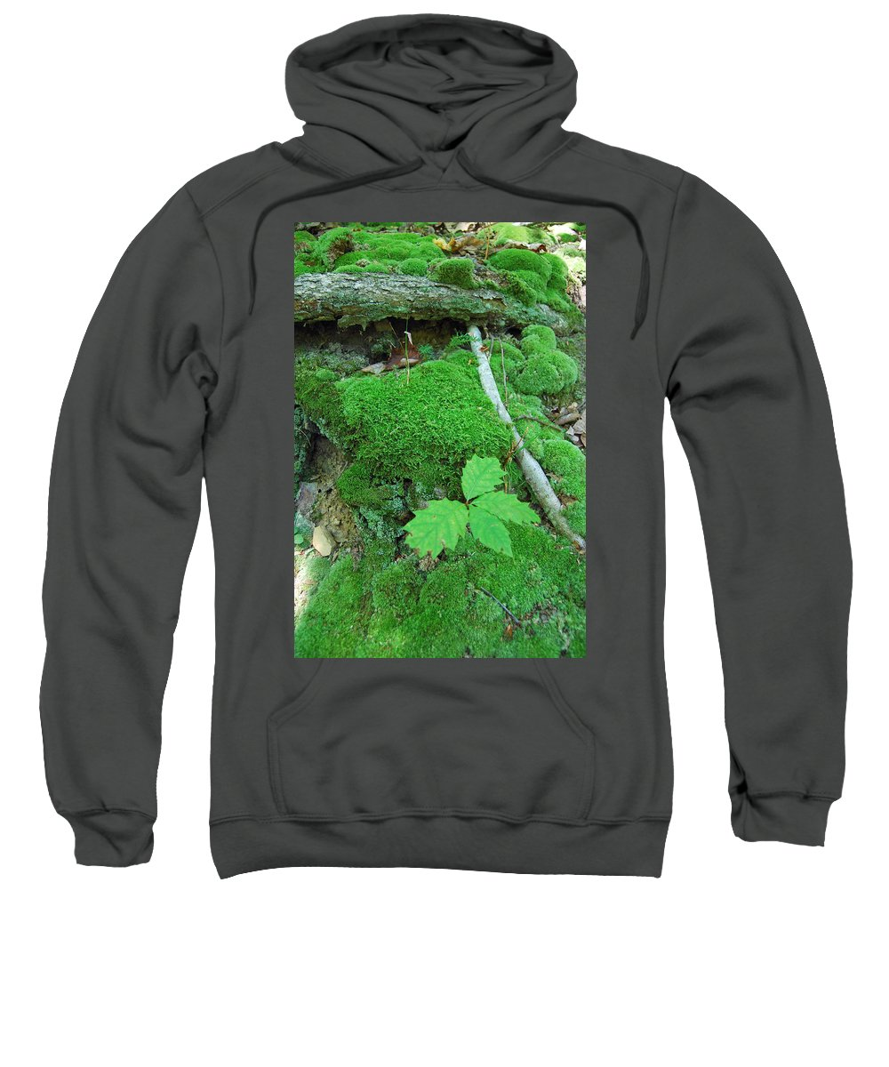 Green Sweatshirt featuring the photograph Sassy Sapling by Trish Hale