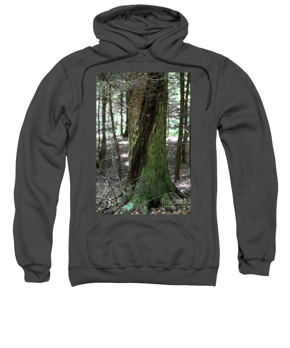 Tree Sweatshirt featuring the photograph Scarred by Amanda Barcon